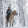 hest i vinterskog lavopplst